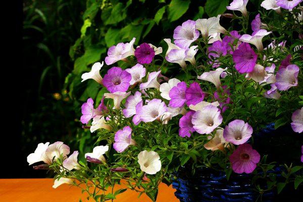 Pflanzen und Blumen für Balkon und Terrasse