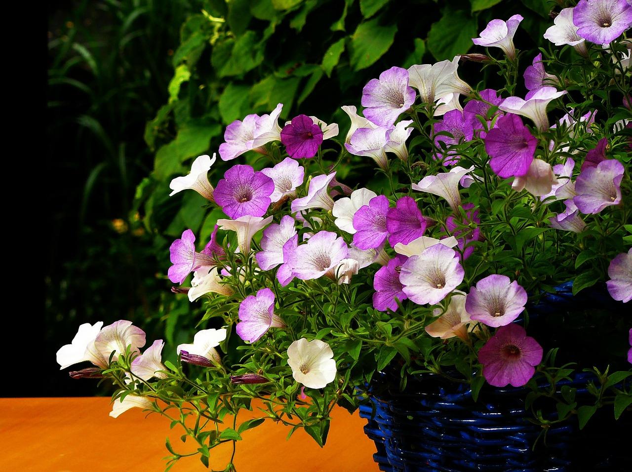 Pflanzen und blumen f r balkon und terrasse - Pflegeleichte pflanzen fur den garten ...