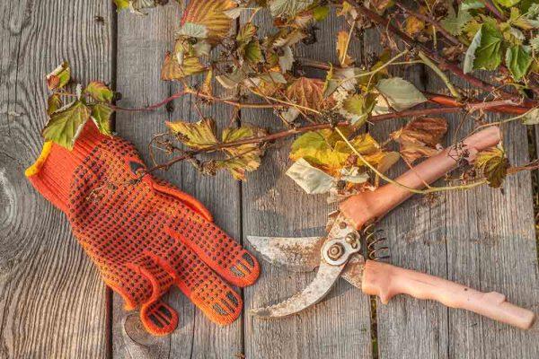 Gartenarbeiten im Herbst – dass soll man beachten