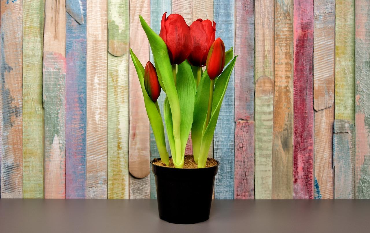 Tulpen im Blumentopf oder Balkonkasten