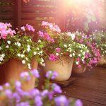 perfekte-pflanzen-fuer-balkon-und-terrasse