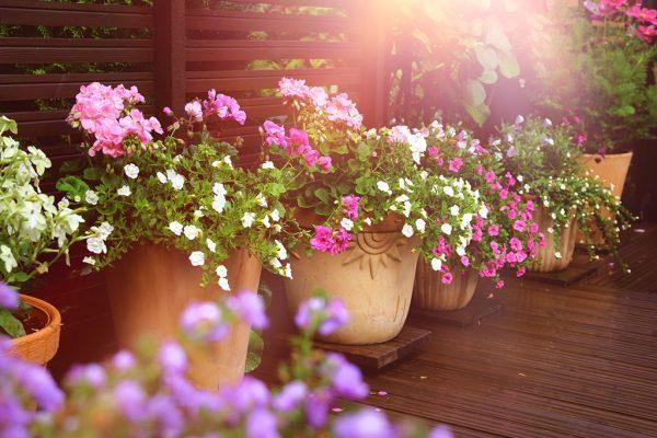 Perfekte Pflanzen für Balkon und Terrasse