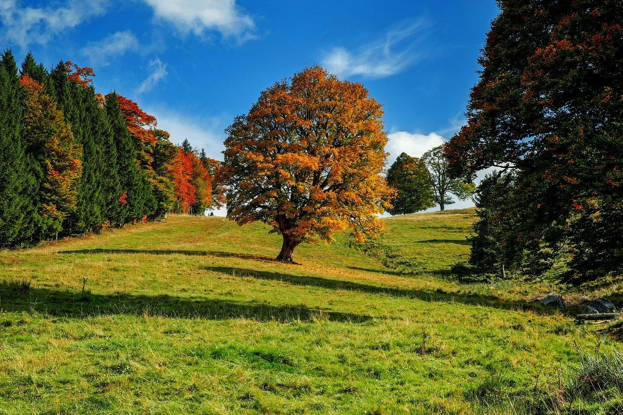 Laubbäume und Nadelbäume - was eignet sich besser zu einem Garten?